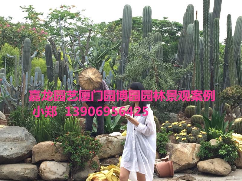 大型园林仙人掌 沙生植物景观布置 厦门园博园案例 沙漠庭院造景