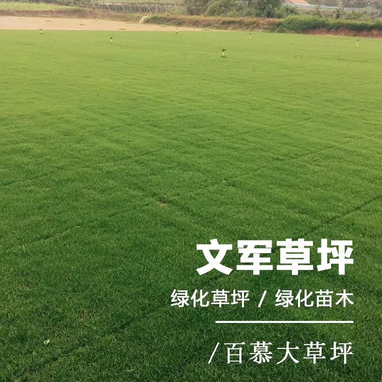 百慕大草坪 绿化草皮草坪基地直销 四季青草坪人工种植草皮