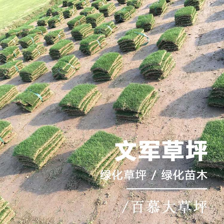 江苏句容基地直供百慕大草坪人工种植真草皮高尔夫球场真草坪绿化