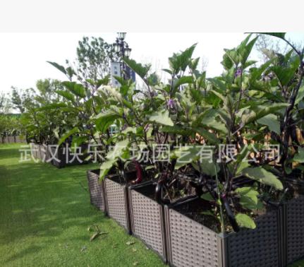 观光、采摘生态园,设计、建造、养护、培训蔬菜采摘园