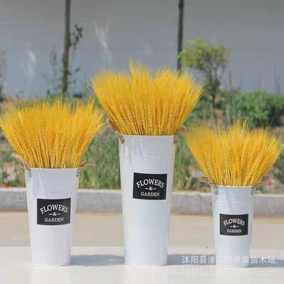 麦穗干花黄金大麦穗花束装饰天然田园金色小麦开业插花搭配摆设花