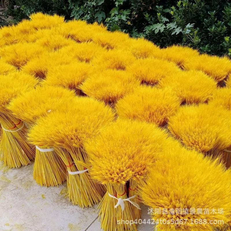 麦穗天然干花开业大麦花束田园装饰展会布置拍摄道具客厅家居摆设